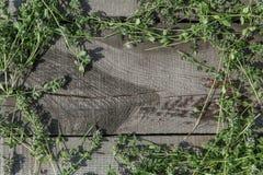 在木头的麝香草 图库摄影
