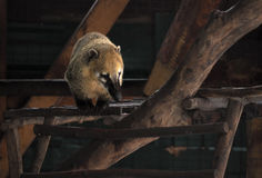 在木建筑的Nosuh黄色 免版税图库摄影