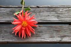 在木blackground的橙色花 库存照片