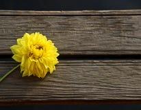 在木blackground的黄色花 库存图片