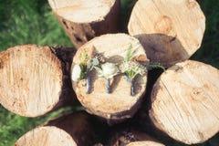 在木spilite的婚礼钮扣眼上插的花 免版税库存图片