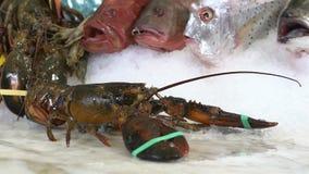 在未加工的螃蟹和各种各样的鱼背景的活龙虾冰 股票录像