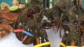 在未加工的螃蟹和各种各样的鱼背景的活龙虾冰 股票视频