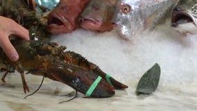 在未加工的螃蟹和各种各样的鱼背景的活龙虾在冰 股票视频