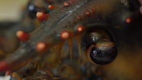 在未加工的螃蟹和各种各样的鱼背景的活龙虾在冰 影视素材
