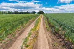 在未成熟的麦田之间的土路 免版税库存照片