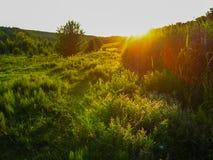 在未损坏的自然的夏天农村风景 免版税图库摄影