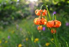 在未损坏的自然的美丽的独特和罕见的花 库存图片