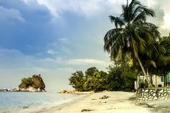 在未触动过的海滩的美丽的棕榈 免版税库存照片