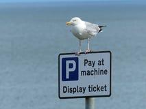 在机器-甚而海鸥的薪水? 图库摄影