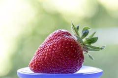 在杂色的背景的草莓 库存照片