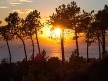 在杉木和山之间的日落 反射在海洋` s wa的太阳 库存图片