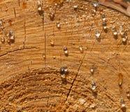 在杉木日志的树脂下落 库存照片
