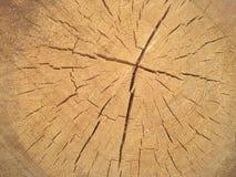 在杉木树干的年轮 库存图片