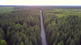 在杉木森林上面上的行动沿有汽车的直路 影视素材