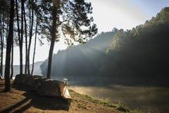 在杉木森林下的帐篷在早晨 库存照片