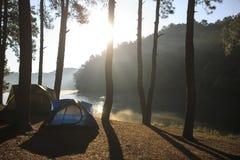 在杉木森林下的帐篷在早晨 库存图片