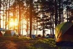 在杉木森林下的野营和帐篷在泰国北部的日落的 图库摄影
