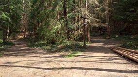 在杉木森林两小径的分叉的路在森林交叉路 影视素材