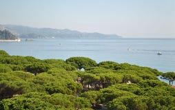 在杉木森林和地中海的看法 免版税库存照片