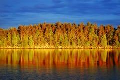 在杉木森林的晚上太阳由湖 免版税库存照片