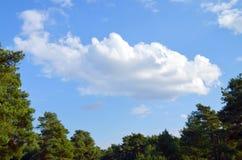 在杉木森林的积雨云 库存照片