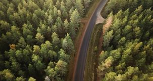 在杉木森林的空中英尺长度有在它中间的路的,照相机走路 股票视频