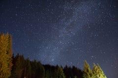 在杉木森林的繁星之夜天空 库存照片