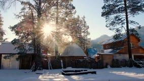 在杉木森林美好的日出的美好的冬天早晨在北妙境森林斯诺伊风景 落在日落的雪 影视素材