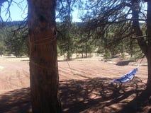 在杉木的吊床 库存图片