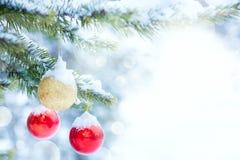 在杉木的圣诞节中看不中用的物品在一个多雪的森林,冬天里分支 库存照片