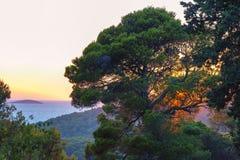 在杉木的日落 免版税图库摄影