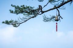在杉木的铜响铃 库存照片