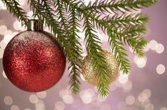 在杉木真正的分支的圣诞节红色球 免版税库存图片