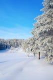 在杉木路冬天附近的森林横向 免版税库存照片