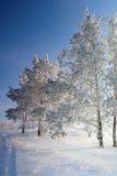在杉木路冬天附近的森林横向 免版税库存图片