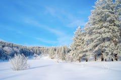 在杉木路冬天附近的森林横向 免版税图库摄影