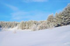 在杉木路冬天附近的森林横向 库存图片