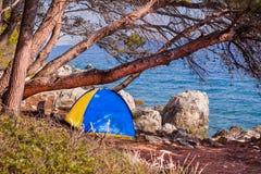 在杉木附近的帐篷 免版税库存图片