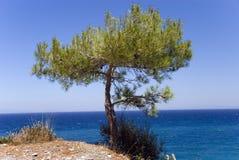 在杉木陡峭的结构树之上 免版税库存图片