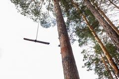 在杉木 免版税图库摄影