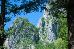 在杉木nad蓝天之间的山风景 免版税库存图片