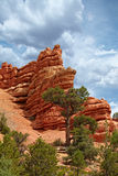 在杉树上的红色岩石峭壁不祥之物柱子尖顶上升我 免版税库存图片