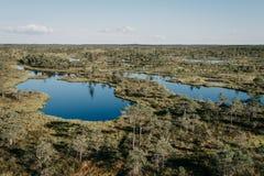 在杉树之间的两个沼泽湖在夏天 Kemeru拉脱维亚 免版税图库摄影