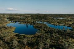 在杉树之间的两个沼泽湖在夏天 Kemeru拉脱维亚 库存图片