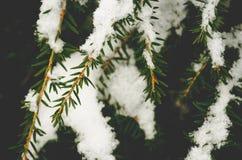 在杉树分支的下落的雪 图库摄影