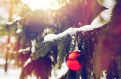 在杉树分支的红色圣诞节球与雪 图库摄影
