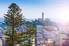 在杉树后的Coit塔在旧金山 图库摄影