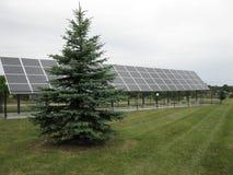 在杉树旁边的太阳电池板 库存照片