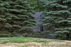 在杉树的土气棚子 免版税库存图片